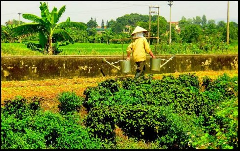 Prog Vietnam